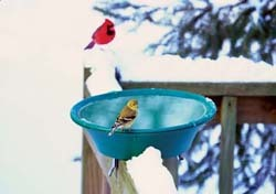 Goldfinch on Birdbath