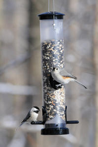 EcoClean Seed Tube with Chickadee and Titmouse